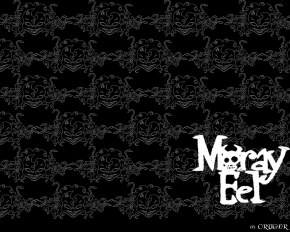 Moray Eel - Фоны  Обои  Картинки на рабочий стол