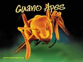 Guano Apes - Обои, фоны, картинки группы